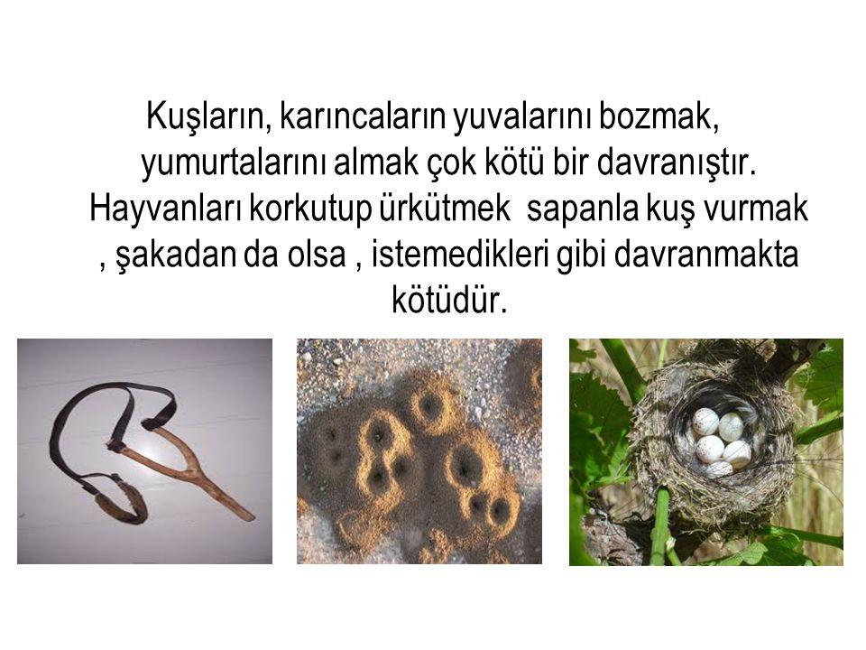 Kuşların, karıncaların yuvalarını bozmak, yumurtalarını almak çok kötü bir davranıştır. Hayvanları korkutup ürkütmek sapanla kuş vurmak, şakadan da ol