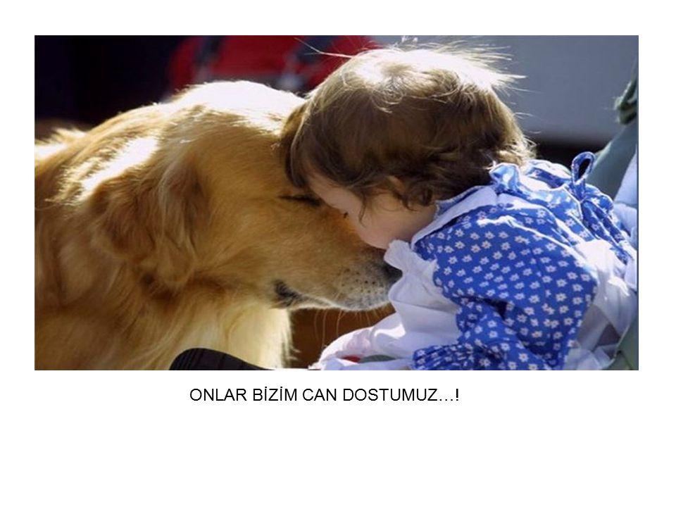 """"""" ONLAR BİZİM CAN DOSTUMUZ…!"""