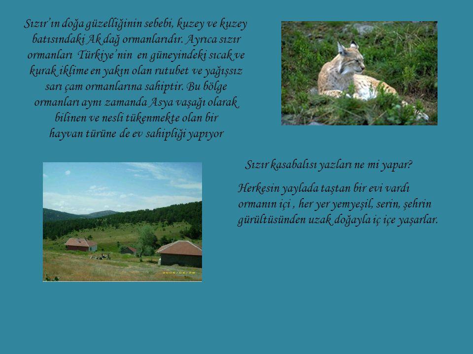 Sızır'ın doğa güzelliğinin sebebi, kuzey ve kuzey batısındaki Ak dağ ormanlarıdır. Ayrıca sızır ormanları Türkiye'nin en güneyindeki sıcak ve kurak ik