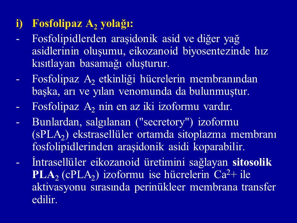 ii) Fosfolipaz C yolağı: -Fosfolipaz C, fosfolipidin fosfodiester bağını kırar; böylece meydana gelen 1,2-diasiI gliserol (DAG) den digliserid lipaz enzimi tarafından araşidonik asid veya benzeri prekürsör yağ asidi koparılır.