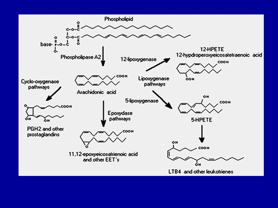 Primer prostaglandinlerin çeşitli hücre tiplerinde yaygın şekilde dağılmış ve biyolojik yönden önemli olanları, E ve F grubu prostaglandinlerdir.