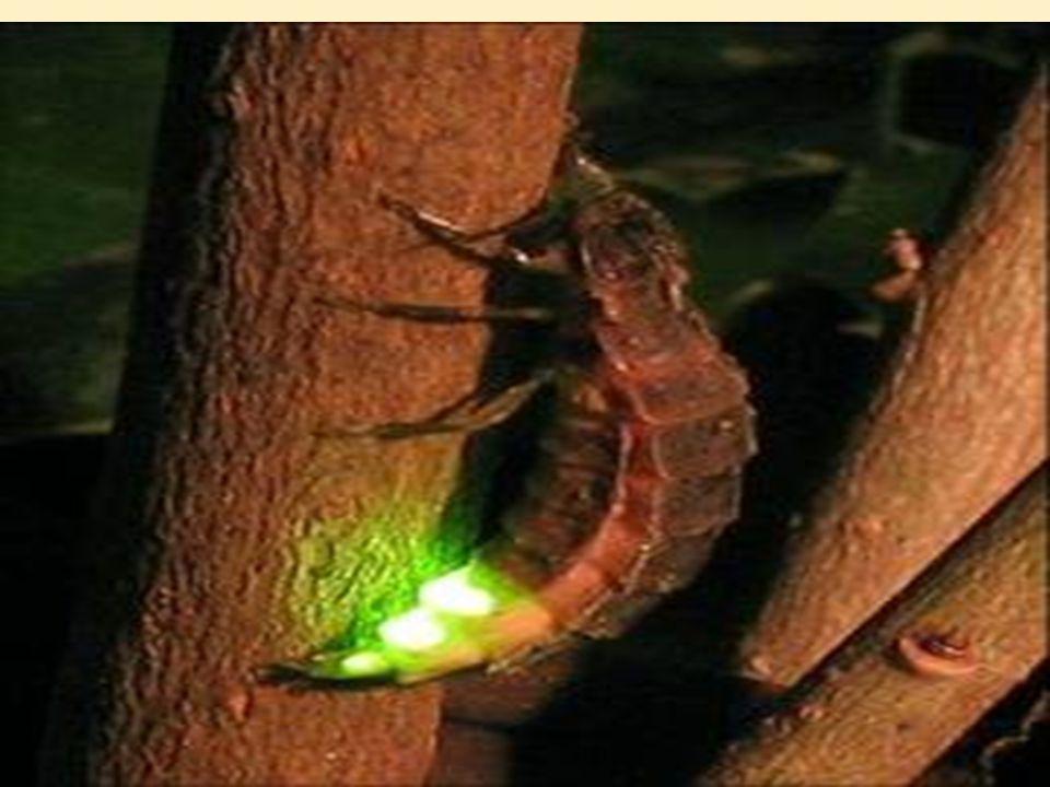  Bir ışık kaynağından çıkan be ışığın yolunu belirten doğrulara ışık ışını denir.
