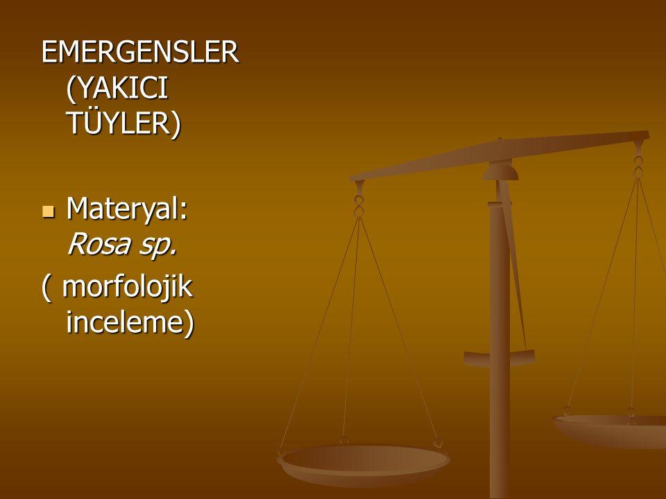 EMERGENSLER (YAKICI TÜYLER) Materyal: Rosa sp. Materyal: Rosa sp. ( morfolojik inceleme)