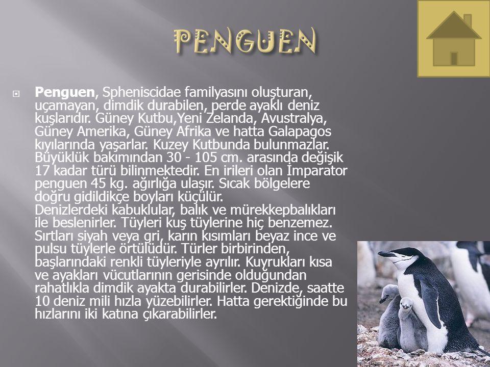  Penguen, Spheniscidae familyasını oluşturan, uçamayan, dimdik durabilen, perde ayaklı deniz kuşlarıdır. Güney Kutbu,Yeni Zelanda, Avustralya, Güney