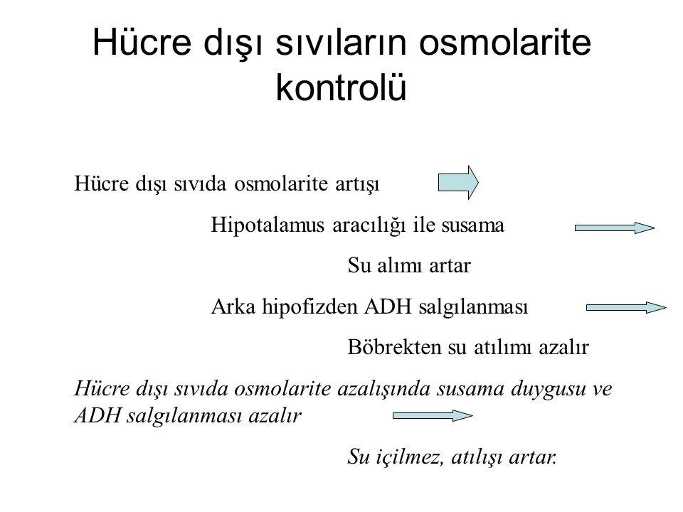 Hücre dışı sıvıların osmolarite kontrolü Hücre dışı sıvıda osmolarite artışı Hipotalamus aracılığı ile susama Su alımı artar Arka hipofizden ADH salgılanması Böbrekten su atılımı azalır Hücre dışı sıvıda osmolarite azalışında susama duygusu ve ADH salgılanması azalır Su içilmez, atılışı artar.