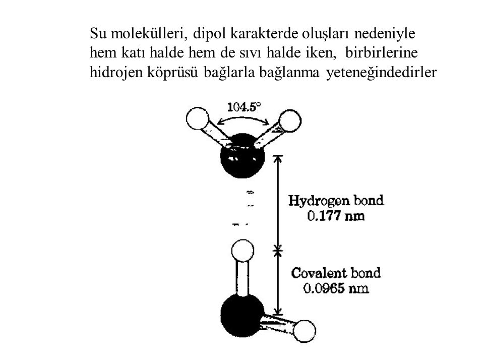 Su molekülleri, dipol karakterde oluşları nedeniyle hem katı halde hem de sıvı halde iken, birbirlerine hidrojen köprüsü bağlarla bağlanma yeteneğinde