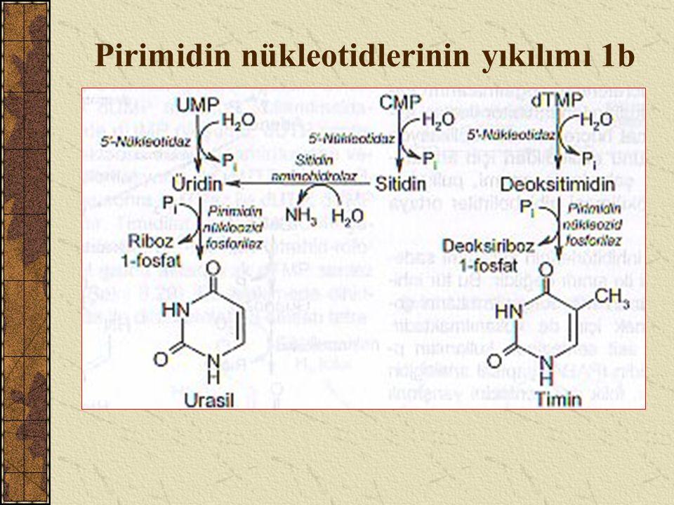 Pirimidin nükleotidlerinin yıkılımı 1b