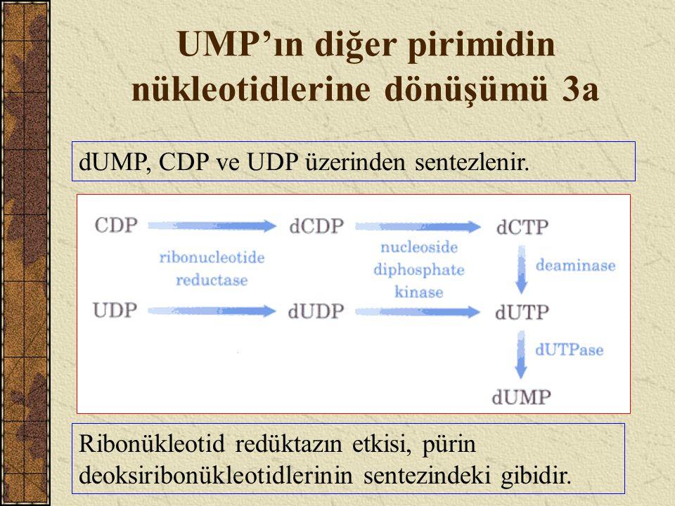 UMP'ın diğer pirimidin nükleotidlerine dönüşümü 3a dUMP, CDP ve UDP üzerinden sentezlenir. Ribonükleotid redüktazın etkisi, pürin deoksiribonükleotidl