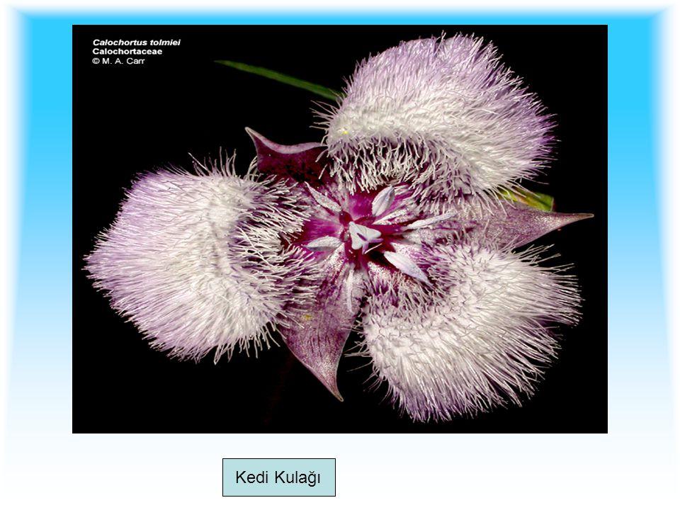 Tozlaşma olabilmesi için polenlerin dişi üreme organına taşınması gerekir.
