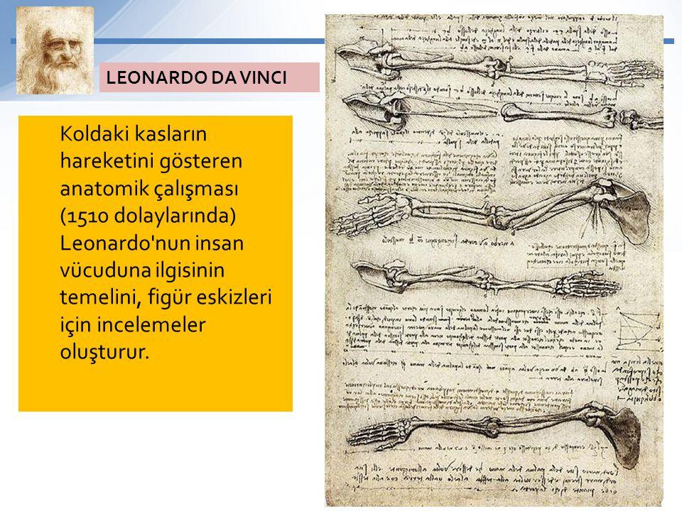 Koldaki kasların hareketini gösteren anatomik çalışması (1510 dolaylarında) Leonardo'nun insan vücuduna ilgisinin temelini, figür eskizleri için incel