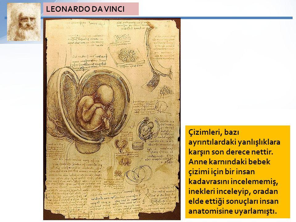 Çizimleri, bazı ayrıntılardaki yanlışlıklara karşın son derece nettir. Anne karnındaki bebek çizimi için bir insan kadavrasını incelememiş, inekleri i