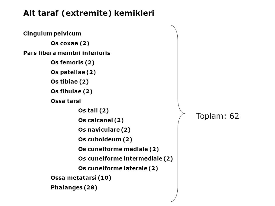 Alt taraf (extremite) kemikleri Cingulum pelvicum Os coxae (2) Pars libera membri inferioris Os femoris (2) Os patellae (2) Os tibiae (2) Os fibulae (