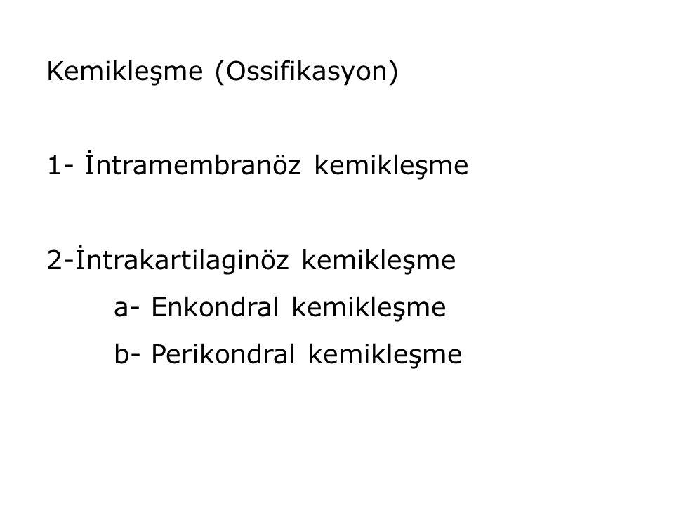 Kemikleşme (Ossifikasyon) 1- İntramembranöz kemikleşme 2-İntrakartilaginöz kemikleşme a- Enkondral kemikleşme b- Perikondral kemikleşme