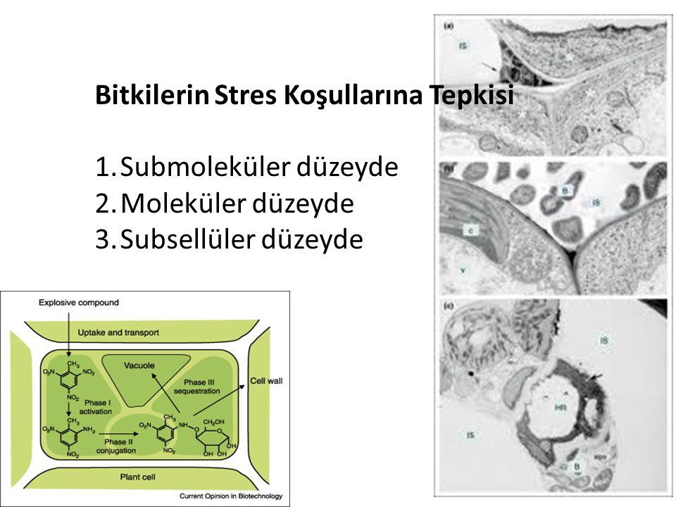 Bitkilerin Stres Koşullarına Tepkisi 1.Submoleküler düzeyde : Serbest radikaller 2.Moleküler düzeyde: Sekonder bileşikler, Polisakkaritler, Proteinler 3.Subsellüler düzeyde: Hücre duvarı ve organel zarlarında dayanım