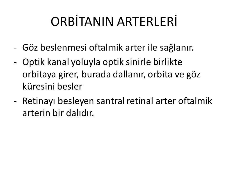 ORBİTANIN ARTERLERİ -Göz beslenmesi oftalmik arter ile sağlanır. -Optik kanal yoluyla optik sinirle birlikte orbitaya girer, burada dallanır, orbita v