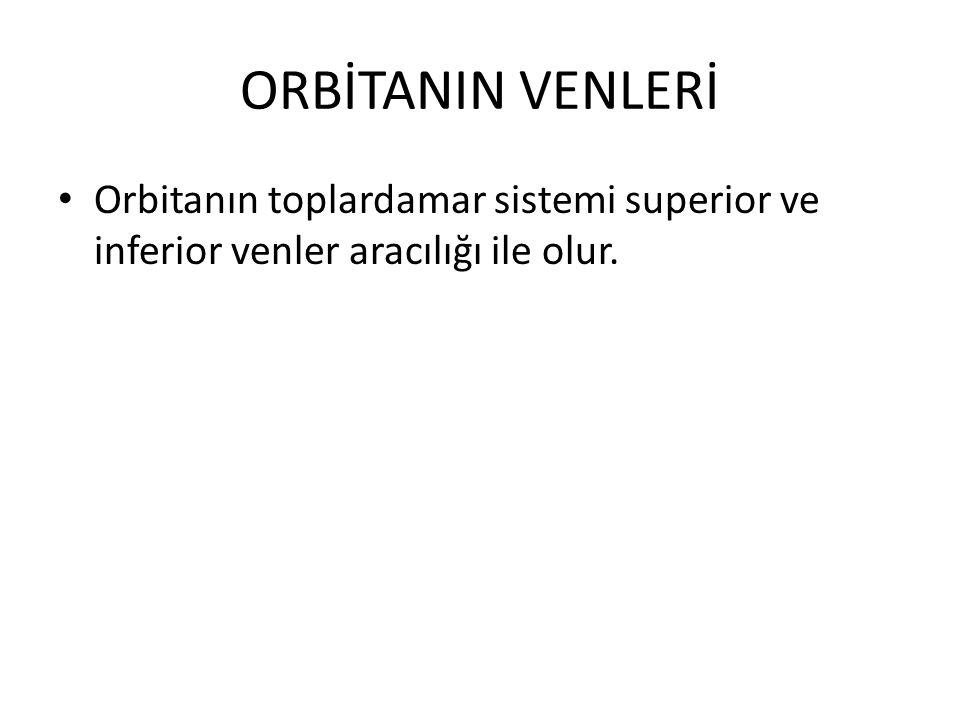ORBİTANIN VENLERİ Orbitanın toplardamar sistemi superior ve inferior venler aracılığı ile olur.