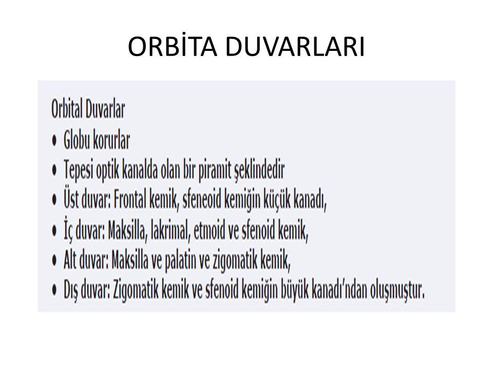 ORBİTA DUVARLARI