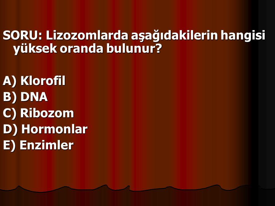 SORU: Lizozomlarda aşağıdakilerin hangisi yüksek oranda bulunur? A) Klorofil B) DNA C) Ribozom D) Hormonlar E) Enzimler