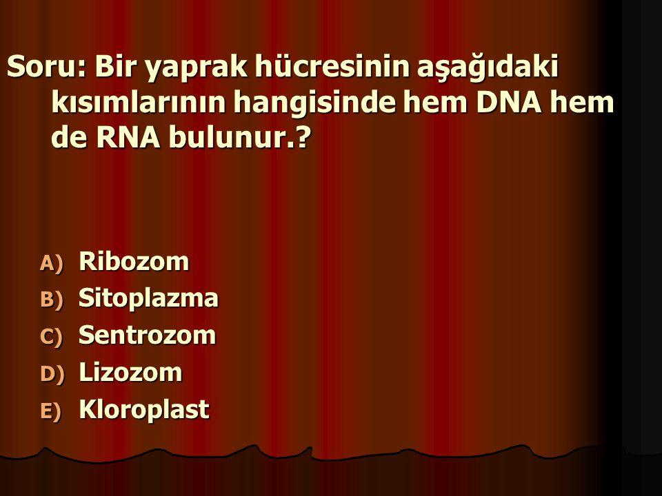Soru: Bir yaprak hücresinin aşağıdaki kısımlarının hangisinde hem DNA hem de RNA bulunur.? A) Ribozom B) Sitoplazma C) Sentrozom D) Lizozom E) Kloropl