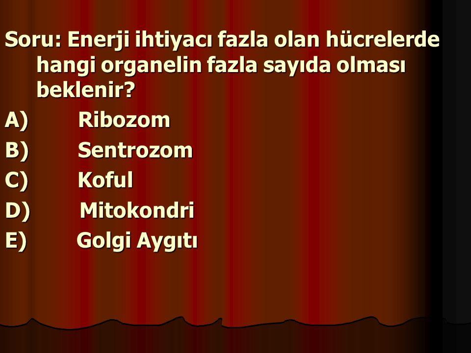 Soru: Enerji ihtiyacı fazla olan hücrelerde hangi organelin fazla sayıda olması beklenir? A) Ribozom B) Sentrozom C) Koful D) Mitokondri E) Golgi Aygı