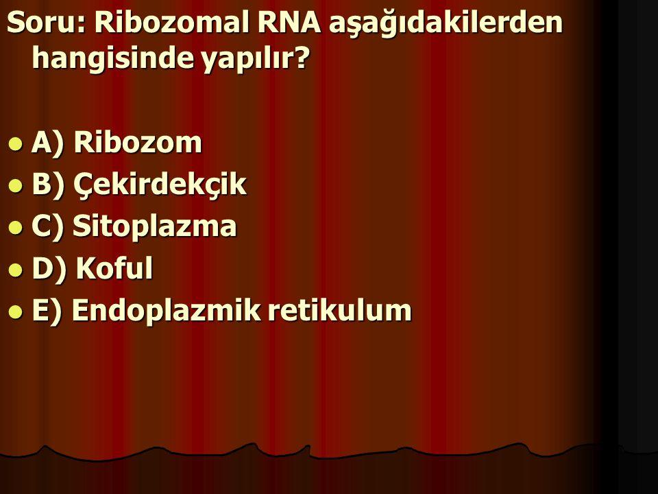 Soru: Ribozomal RNA aşağıdakilerden hangisinde yapılır? A) Ribozom B) Çekirdekçik C) Sitoplazma D) Koful E) Endoplazmik retikulum