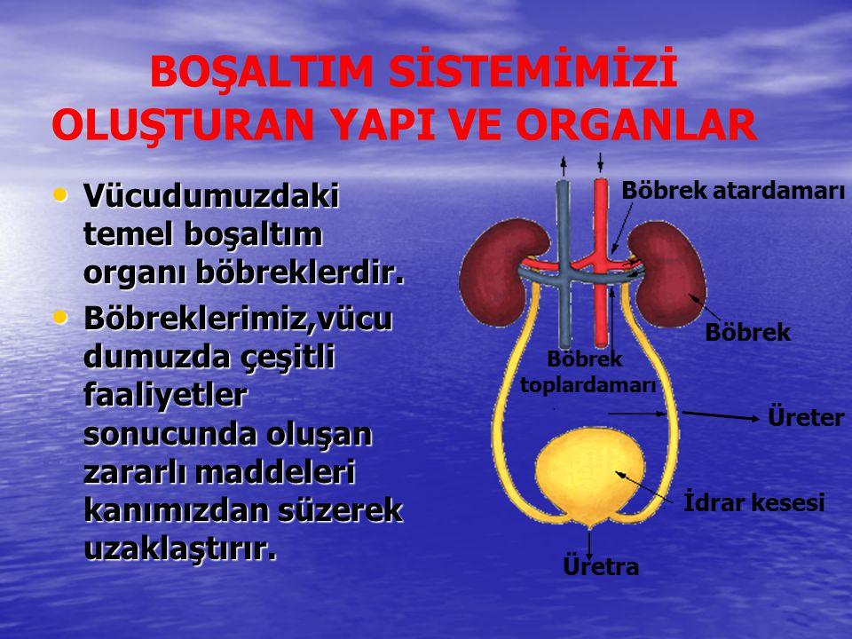 BOŞALTIM SİSTEMİMİZİ OLUŞTURAN YAPI VE ORGANLAR Vücudumuzdaki temel boşaltım organı böbreklerdir. Vücudumuzdaki temel boşaltım organı böbreklerdir. Bö