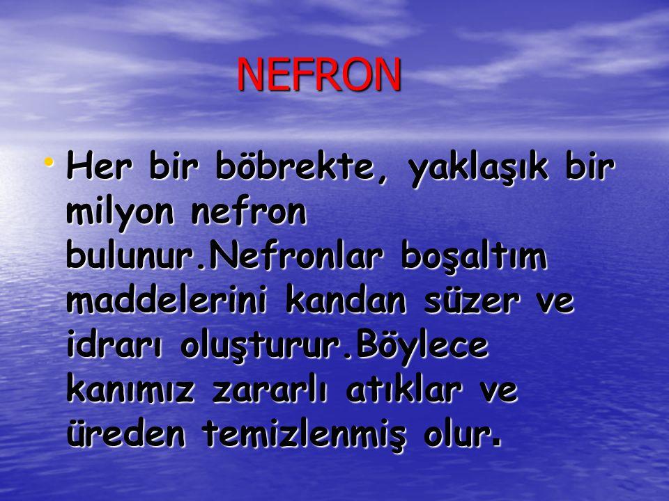 NEFRON NEFRON Her bir böbrekte, yaklaşık bir milyon nefron bulunur.Nefronlar boşaltım maddelerini kandan süzer ve idrarı oluşturur.Böylece kanımız zar