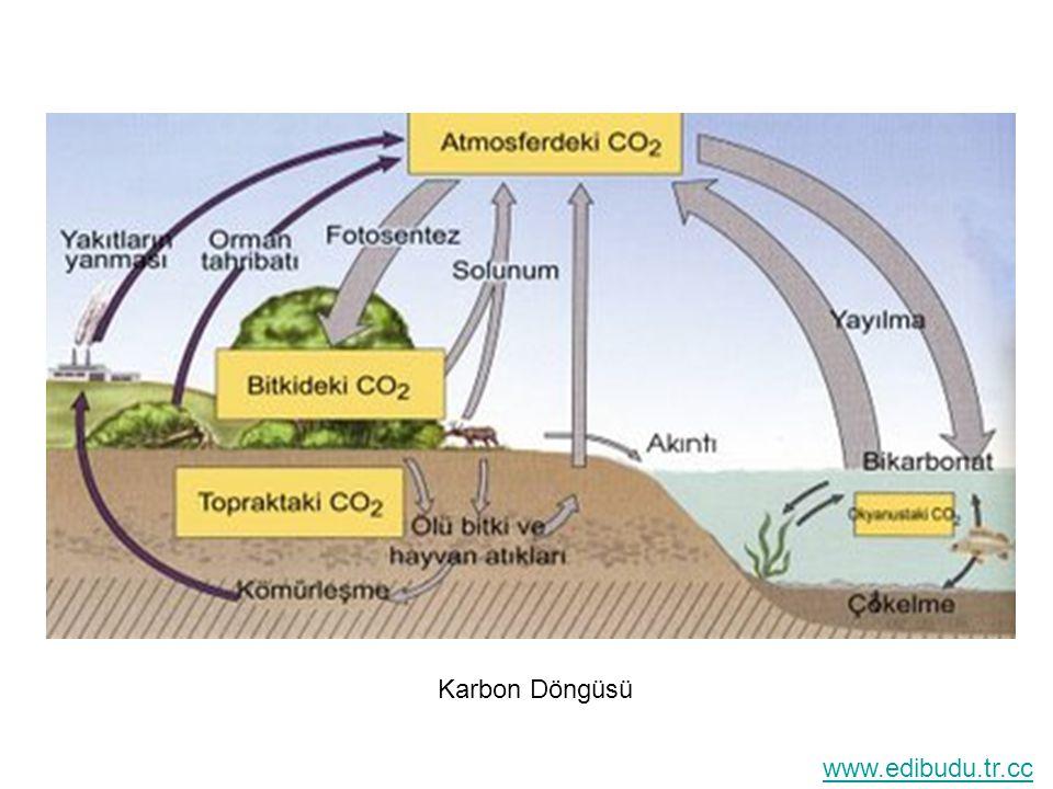Karbon Döngüsü www.edibudu.tr.cc