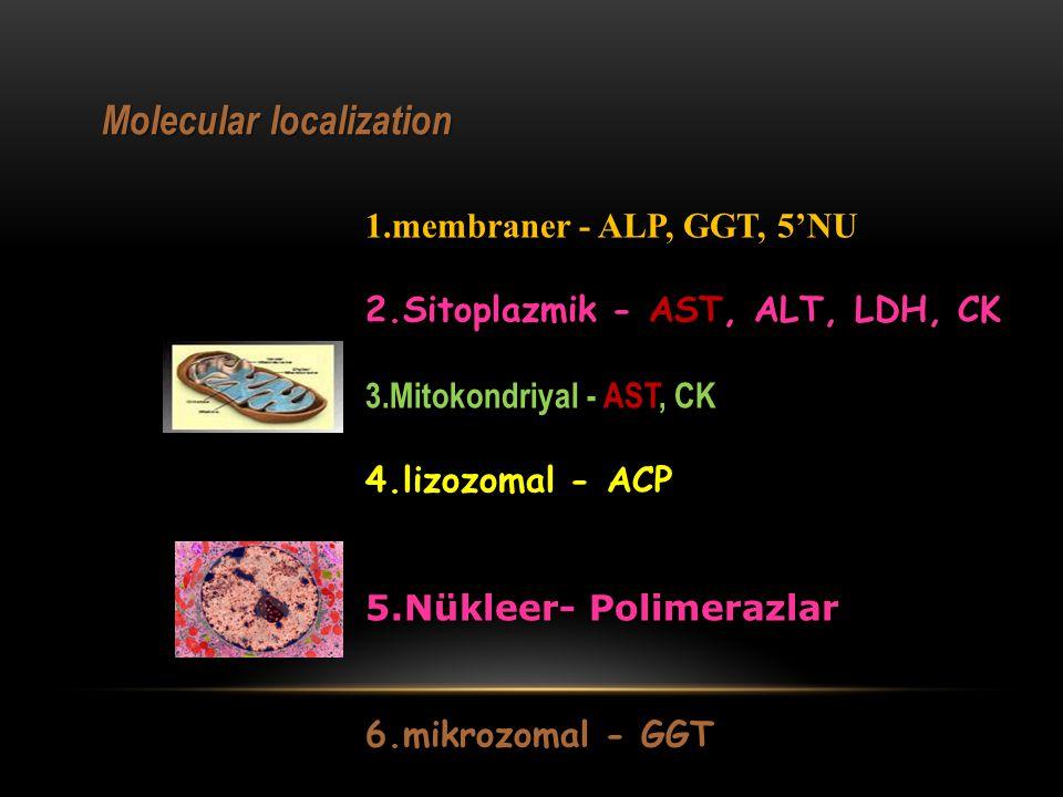 Molecular localization 1.membraner - ALP, GGT, 5'NU 2.Sitoplazmik - AST, ALT, LDH, CK 3.Mitokondriyal - AST, CK 4.lizozomal - ACP 5.Nükleer- Polimeraz