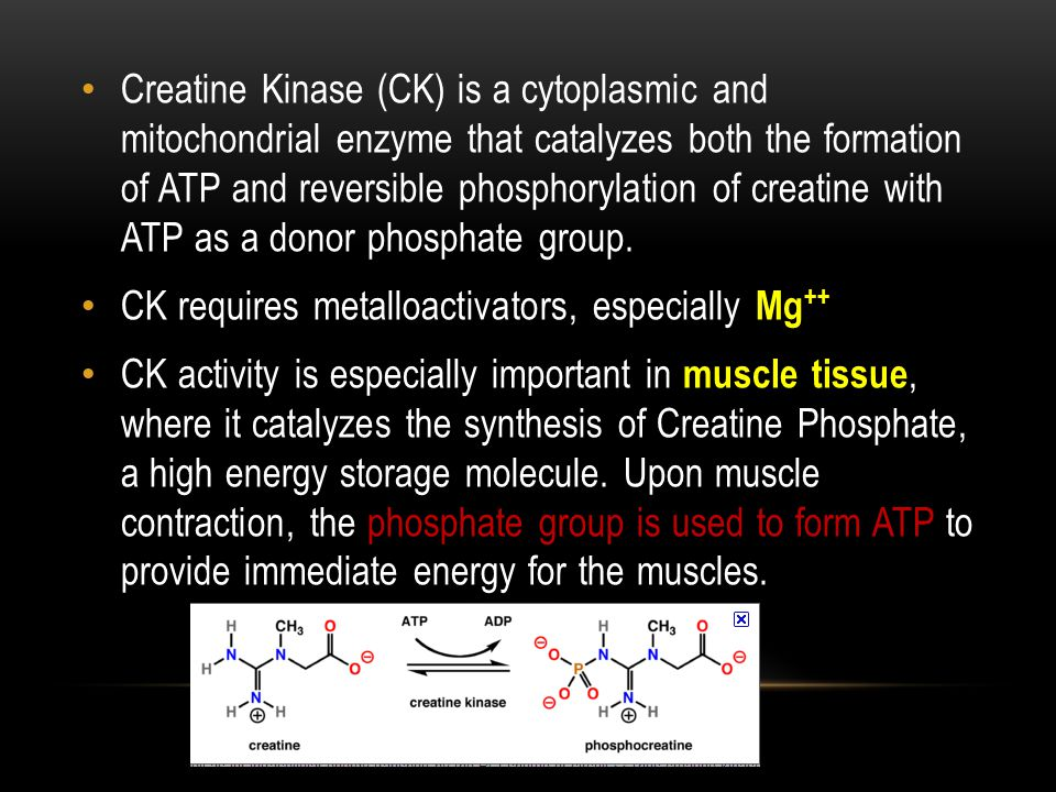 Creatine Kinase (CK) is a cytoplasmic and mitochondrial enzyme that catalyzes both the formation of ATP and reversible phosphorylation of creatine with ATP as a donor phosphate group.