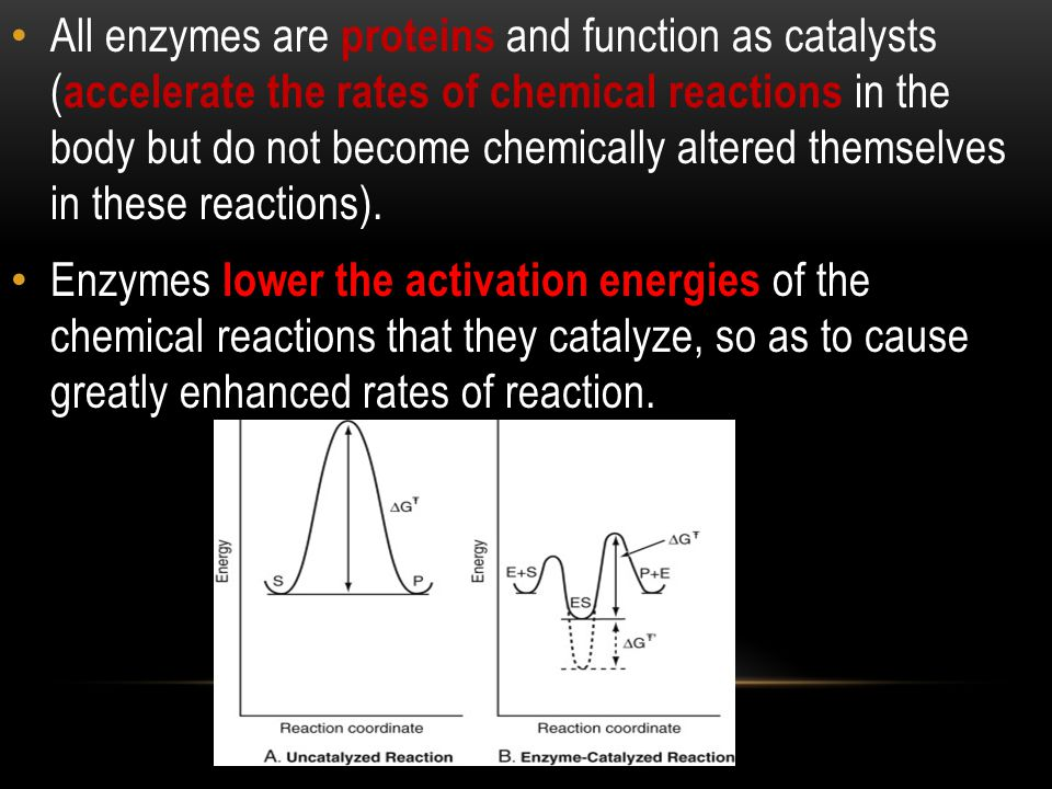 Enzymes interact very specifically with their substrates (do not interact with any molecules other than their substrates).
