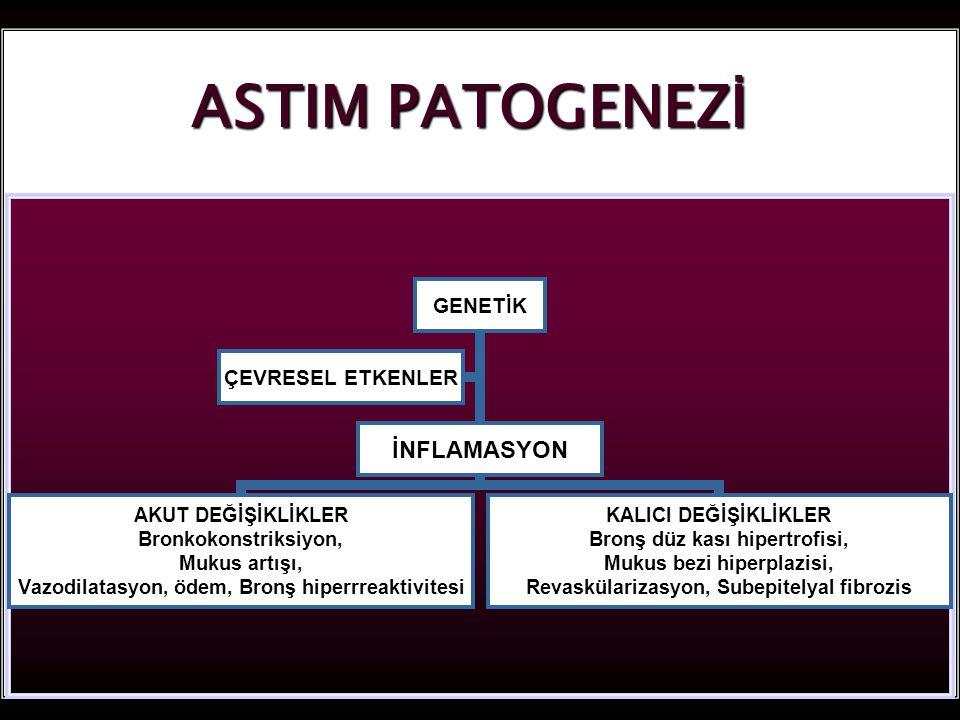 10 ASTIM PATOGENEZİ GENETİK İNFLAMASYON AKUT DEĞİŞİKLİKLER Bronkokonstriksiyon, Mukus artışı, Vazodilatasyon, ödem, Bronş hiperrreaktivitesi KALICI DEĞİŞİKLİKLER Bronş düz kası hipertrofisi, Mukus bezi hiperplazisi, Revaskülarizasyon, Subepitelyal fibrozis ÇEVRESEL ETKENLER
