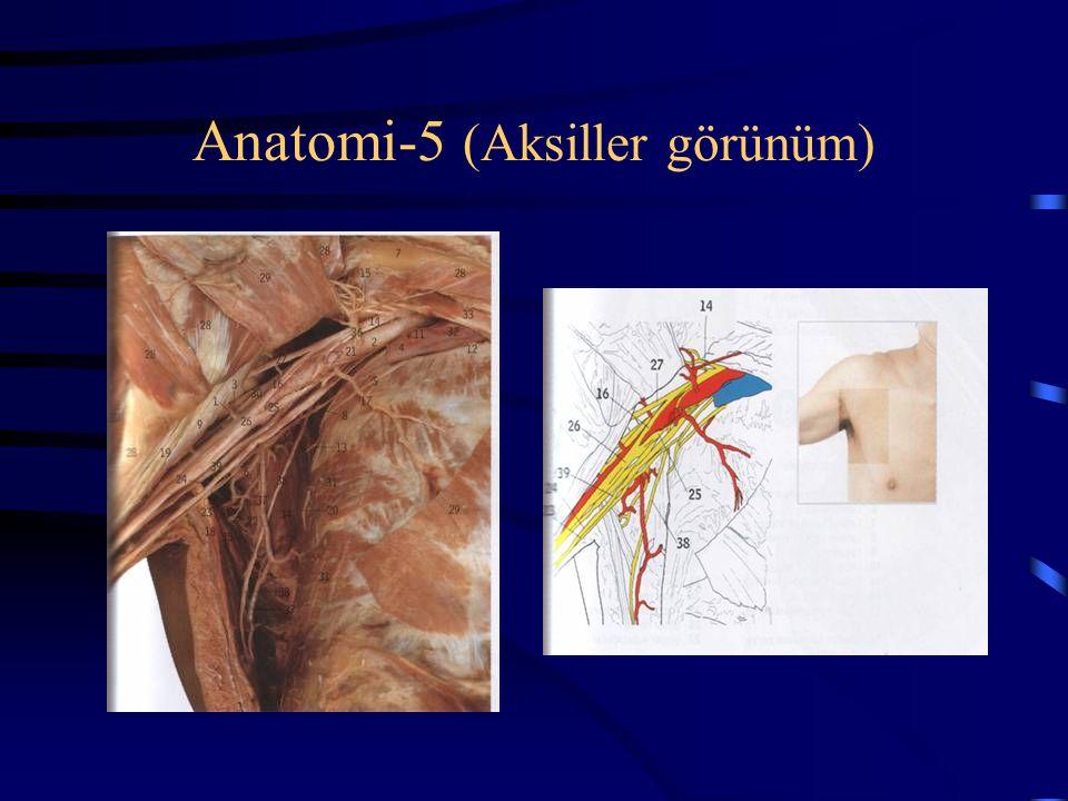 Anatomi-5 (Aksiller görünüm)