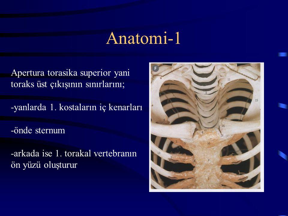 Anatomi-1 Apertura torasika superior yani toraks üst çıkışının sınırlarını; -yanlarda 1. kostaların iç kenarları -önde sternum -arkada ise 1. torakal