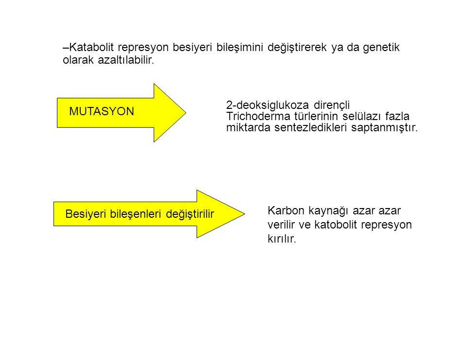 –Katabolit represyon besiyeri bileşimini değiştirerek ya da genetik olarak azaltılabilir.