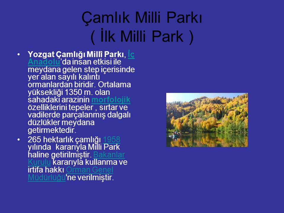 Çamlık Milli Parkı ( İlk Milli Park ) Yozgat Çamlığı Millî Parkı, İç Anadolu'da insan etkisi ile meydana gelen step içerisinde yer alan sayılı kalıntı