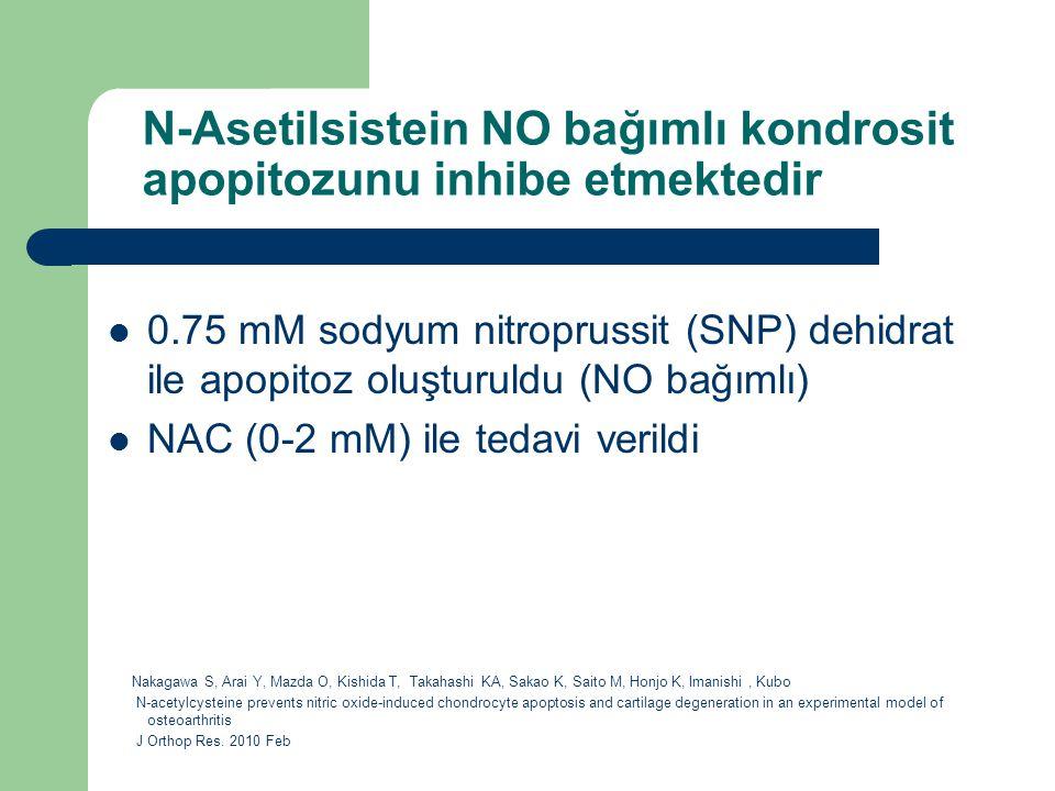 N-Asetilsistein NO bağımlı kondrosit apopitozunu inhibe etmektedir 0.75 mM sodyum nitroprussit (SNP) dehidrat ile apopitoz oluşturuldu (NO bağımlı) NA