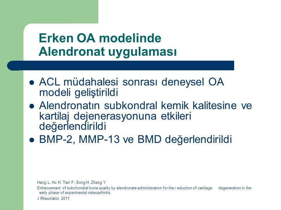 Erken OA modelinde Alendronat uygulaması ACL müdahalesi sonrası deneysel OA modeli geliştirildi Alendronatın subkondral kemik kalitesine ve kartilaj d