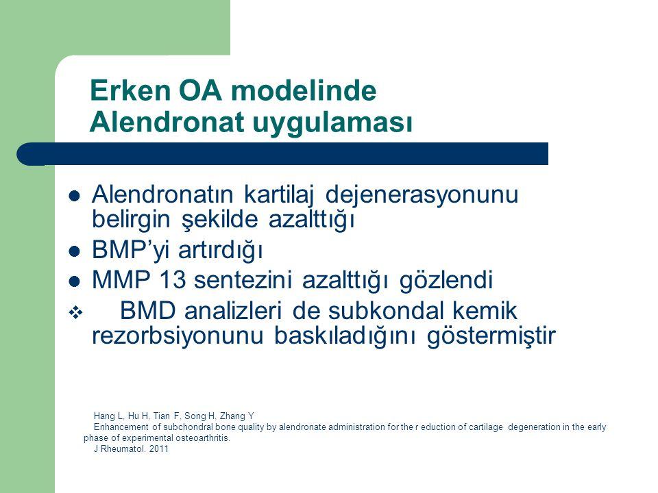 Erken OA modelinde Alendronat uygulaması Alendronatın kartilaj dejenerasyonunu belirgin şekilde azalttığı BMP'yi artırdığı MMP 13 sentezini azalttığı