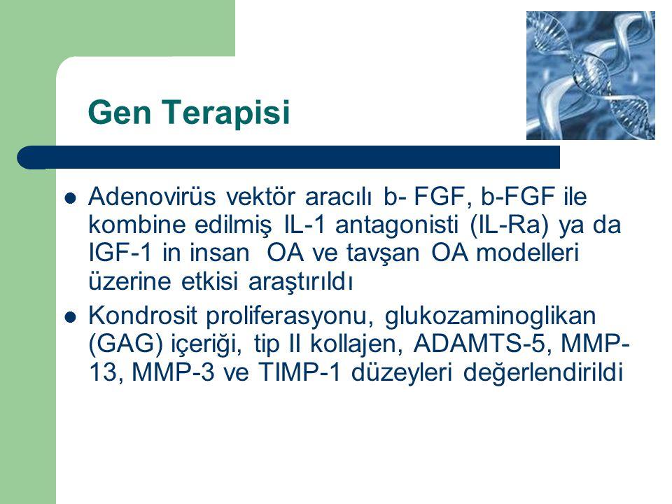 Gen Terapisi Adenovirüs vektör aracılı b- FGF, b-FGF ile kombine edilmiş IL-1 antagonisti (IL-Ra) ya da IGF-1 in insan OA ve tavşan OA modelleri üzeri