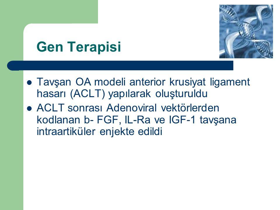 Gen Terapisi Tavşan OA modeli anterior krusiyat ligament hasarı (ACLT) yapılarak oluşturuldu ACLT sonrası Adenoviral vektörlerden kodlanan b- FGF, IL-