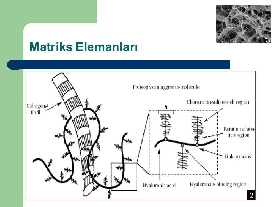 Matriks Elemanları
