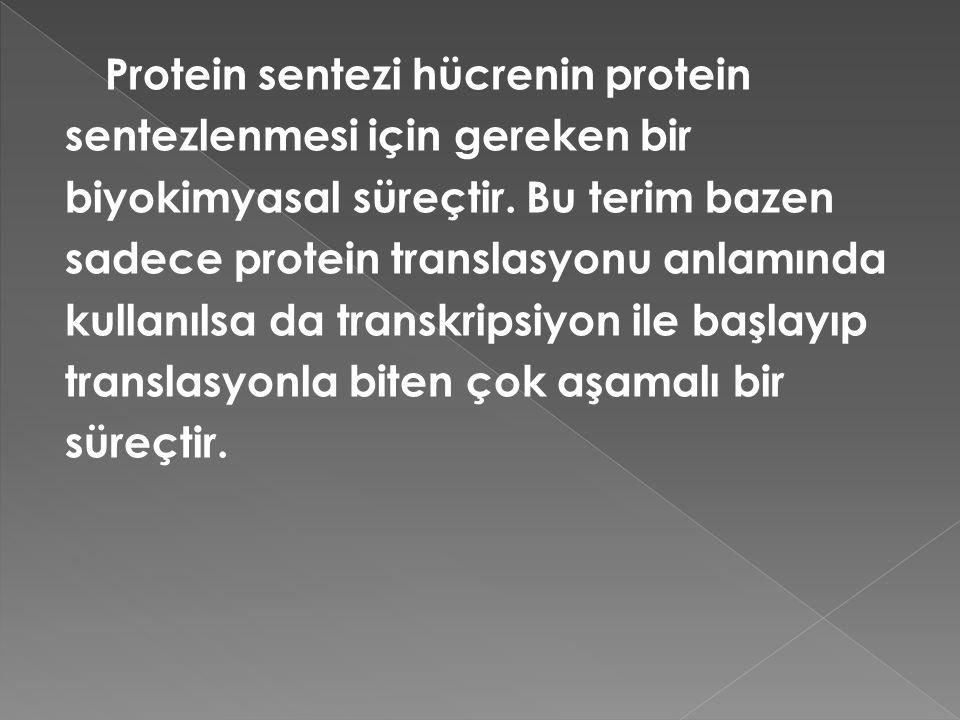 Protein sentezi hücrenin protein sentezlenmesi için gereken bir biyokimyasal süreçtir. Bu terim bazen sadece protein translasyonu anlamında kullanılsa