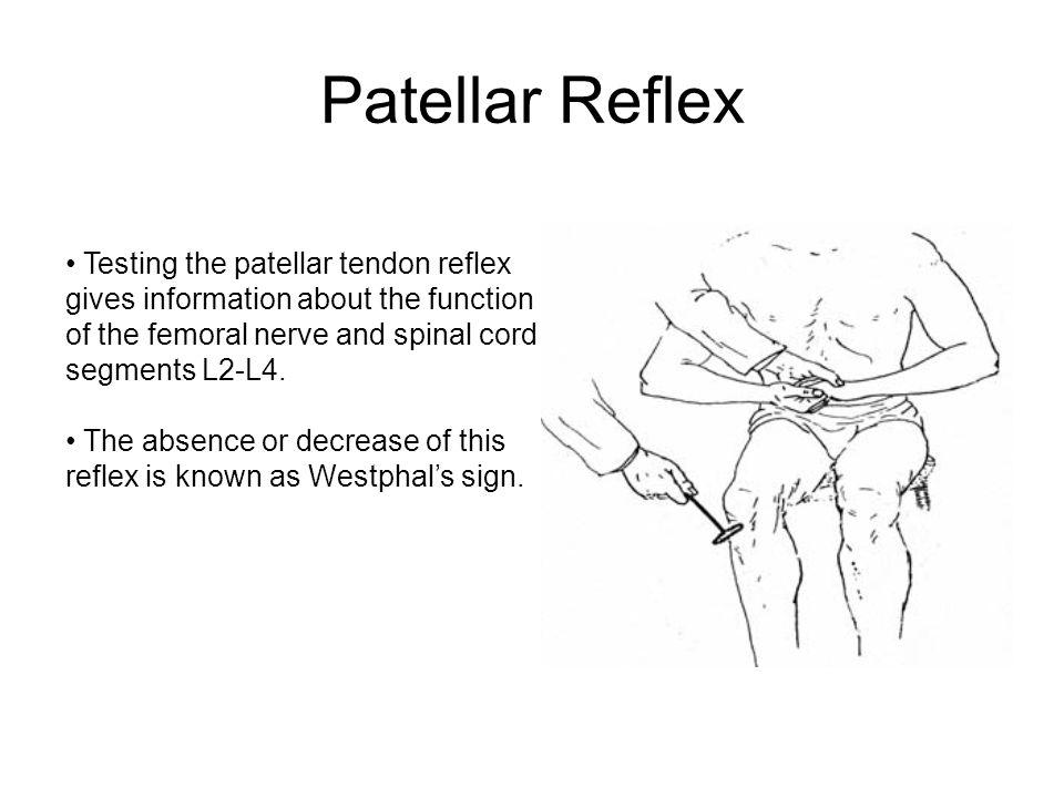 Patellar Reflex http://www.brainviews.com/abFiles/AniPatellar.htm