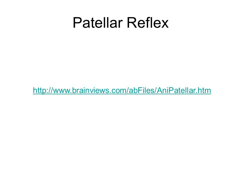 Patellar Reflex http://www.brainviews.com/abFiles/AniPatellar.htm