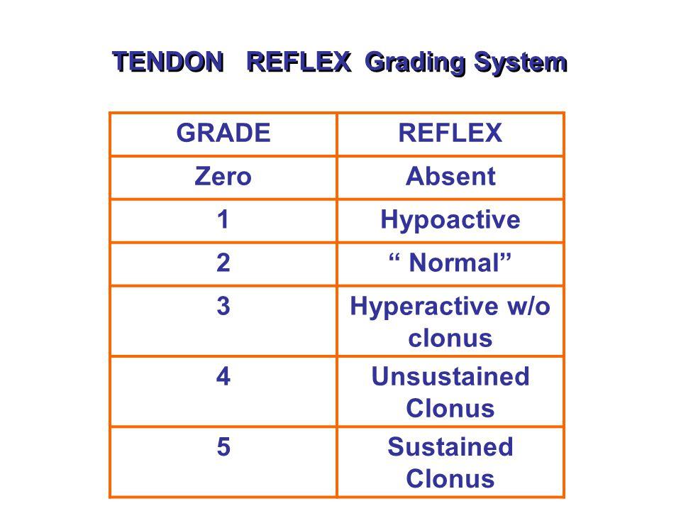 TENDON REFLEX Grading System GRADEREFLEX ZeroAbsent 1Hypoactive 2 Normal 3Hyperactive w/o clonus 4Unsustained Clonus 5Sustained Clonus