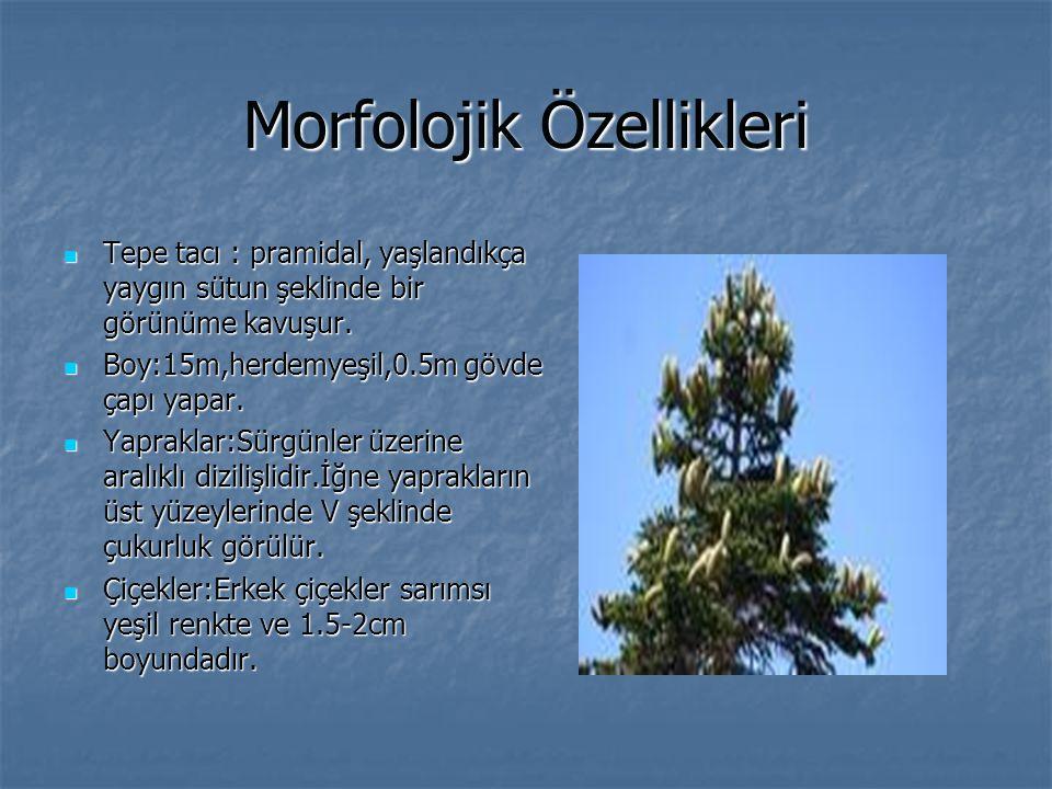 Morfolojik Özellikleri Tepe tacı : pramidal, yaşlandıkça yaygın sütun şeklinde bir görünüme kavuşur. Tepe tacı : pramidal, yaşlandıkça yaygın sütun şe