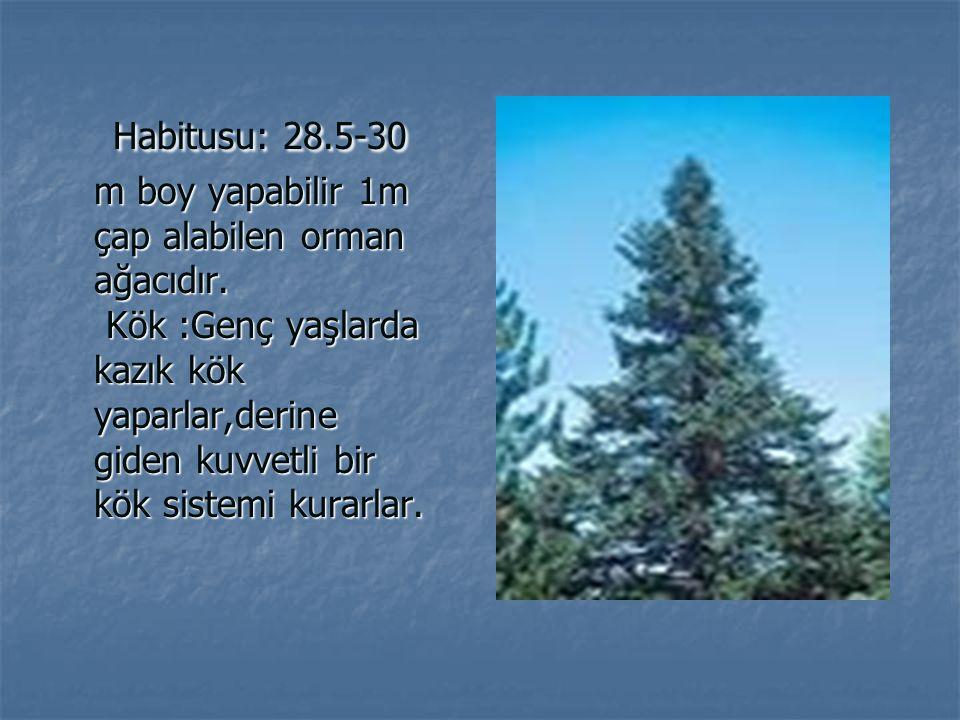 Habitusu: 28.5-30 m boy yapabilir 1m çap alabilen orman ağacıdır. Kök :Genç yaşlarda kazık kök yaparlar,derine giden kuvvetli bir kök sistemi kurarlar
