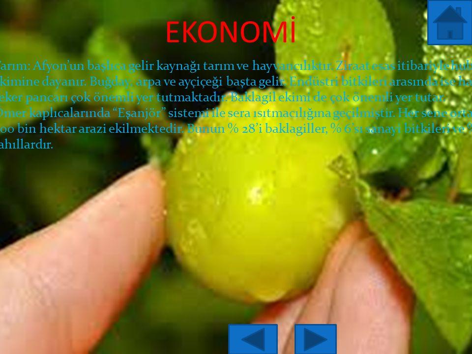 EKONOMİ Tarım: Afyon'un başlıca gelir kaynağı tarım ve hayvancılıktır.