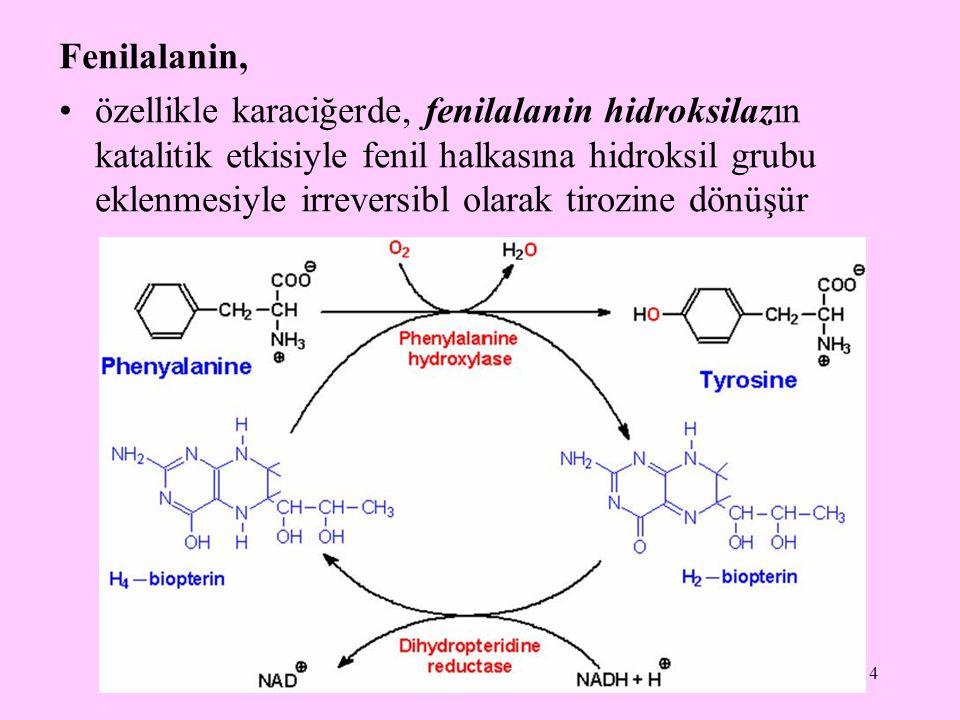 14 Fenilalanin, özellikle karaciğerde, fenilalanin hidroksilazın katalitik etkisiyle fenil halkasına hidroksil grubu eklenmesiyle irreversibl olarak t